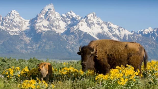 Yellowstone National Park - The Oldest National Park in the US