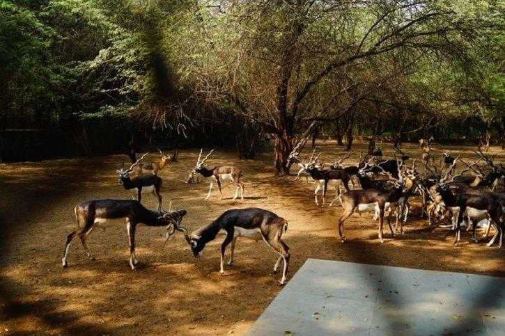 Be in awe at Lucknow Zoological Garden