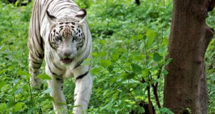 Lucknow Zoo - Timings, Ticket Price, Map, Images, Animals, Opening Days