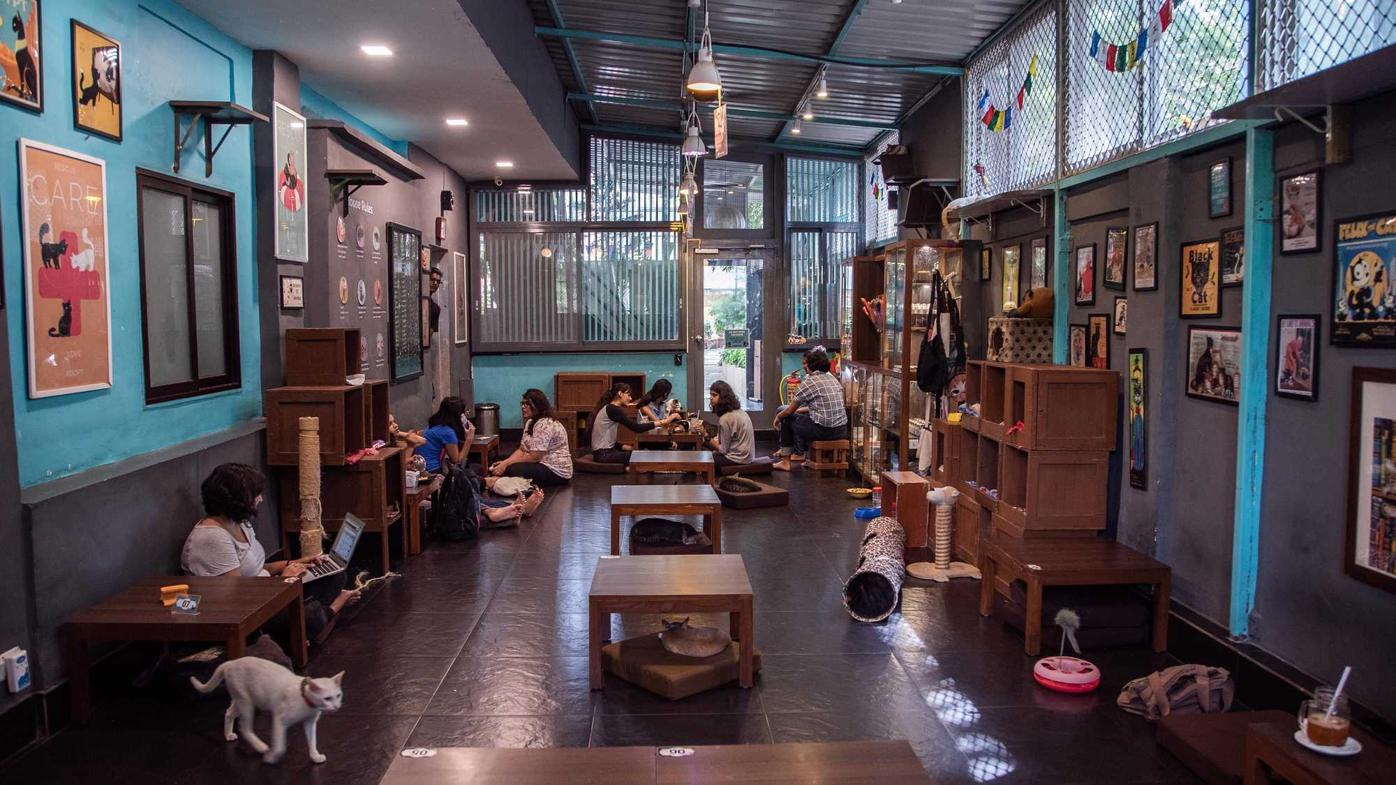 Cat Café Studio, Mumbai- India's first Café for Stray Cats