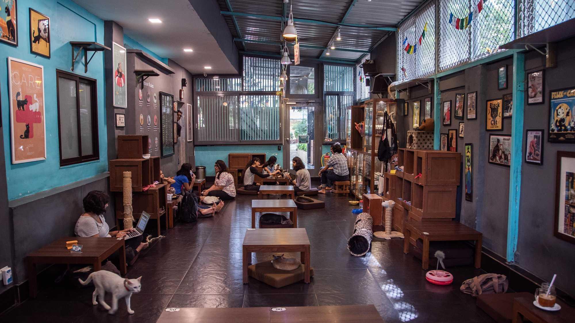 Cat Café Studio, Mumbai- India's first Café for Stray Cats