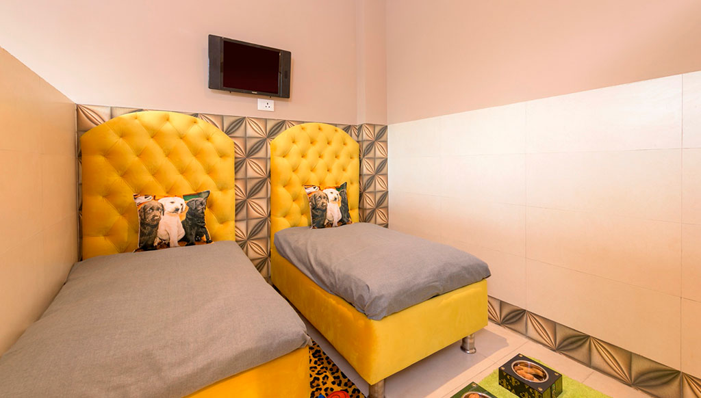 Cretterati, Gurgaon – India's first Luxury Dog Hotel