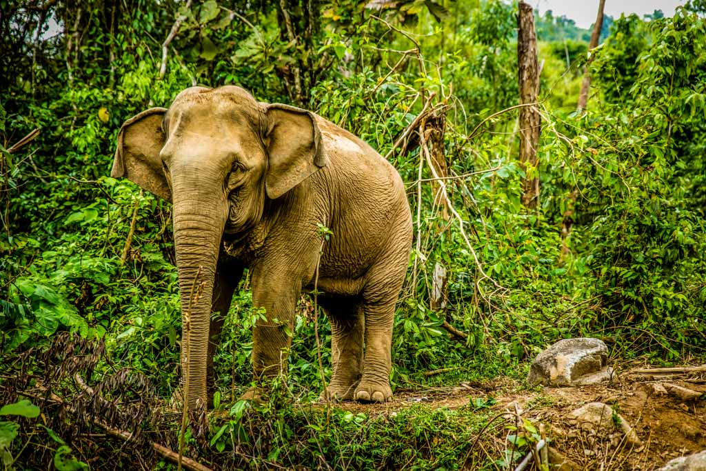 Sai Sanctuary - India's Only Private Wild Life Sanctuary