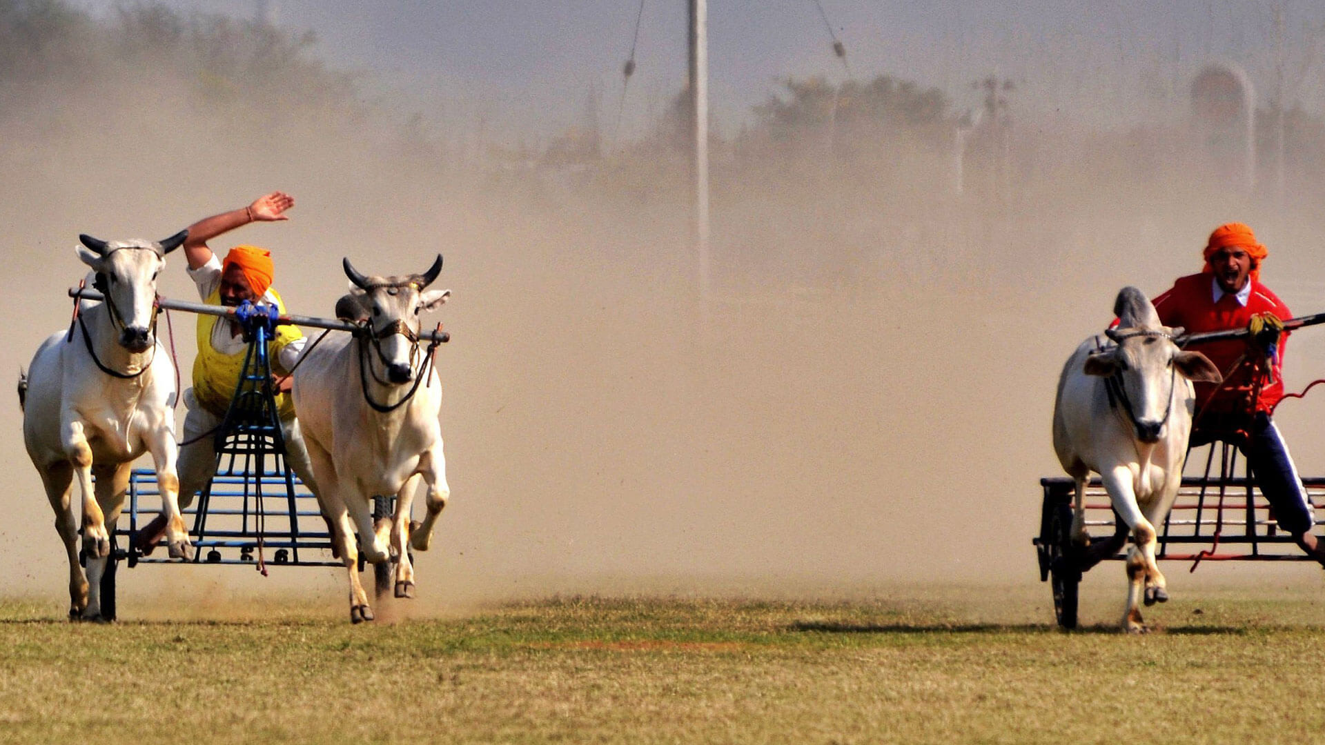 Bull Racing at Kila Raipur Sports Festival, Punjab