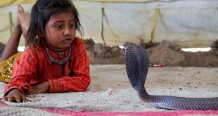 Shetpal - The Snake Village of India