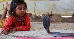 Shetpal - The Snake Village of India