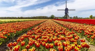 Skagit Valley Tulip Fields and Festival of Washington, U.S.