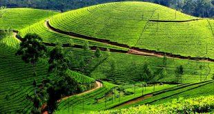 Kolukkumalai Tea Estate – World's Highest Tea Estate
