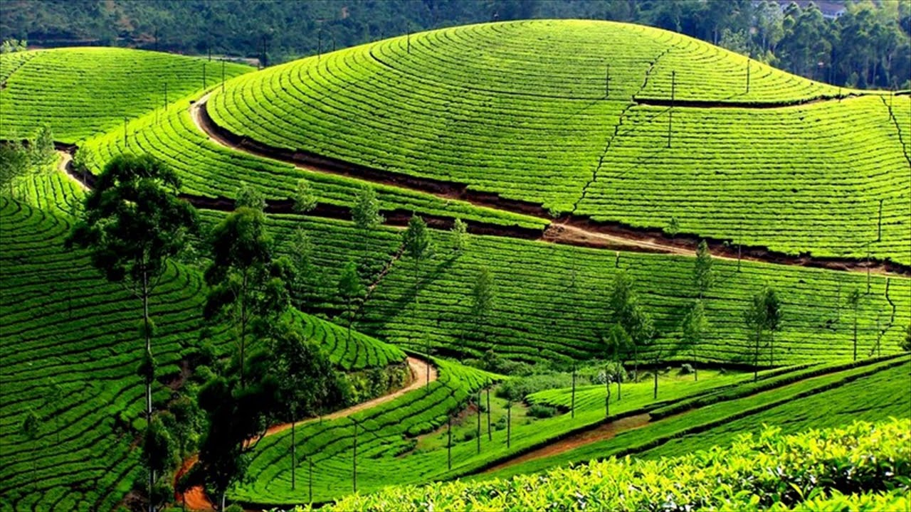 Kolukkumalai Tea Estate – World's Highest Tea Estate
