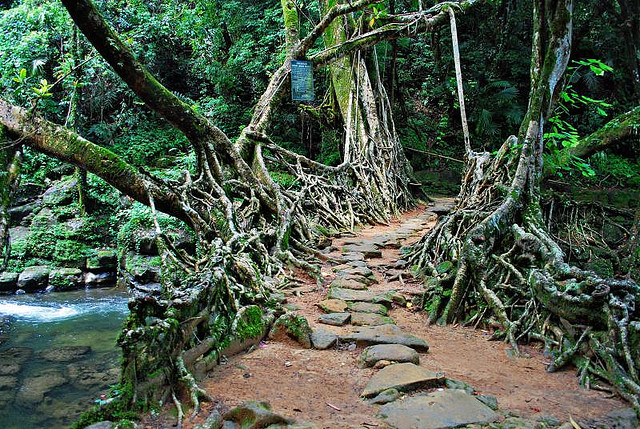 Mawlynnong's Root bridges